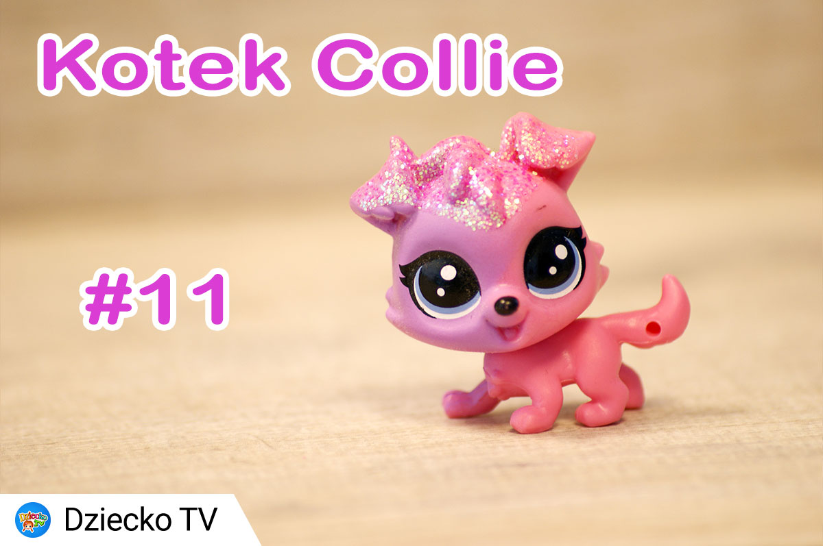 kotek collie 11